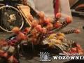 001 Indianie Wozownia 2014